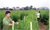 Sản xuất nông nghiệp ứng dụng công nghệ cao: Đầu tư cho sản phẩm có lợi thế