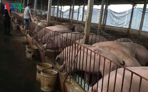 """Giá lợn hơi, chạm đáy, Bộ Nông nghiệp, """"cầu cứu"""", Thủ tướng Chính phủ"""