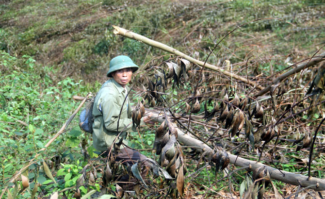Vụ chặt phá rừng trồng tại xã An Lạc (Sơn Động): Lỗi từ hai phía
