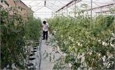 Mở rộng mô hình mới,  tăng giá trị trên đất nông nghiệp