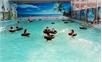 Bể bơi không đạt chuẩn: Lợi ít, hại nhiều