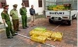 Thu giữ 4.500 con gia cầm giống nhập lậu từ Trung Quốc