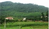 Bắc Giang: Hỗ trợ trồng 400 nghìn cây phân tán