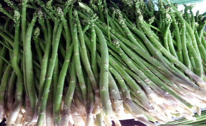 Green asparagus of Dai Dong cooperative sold in supermarkets