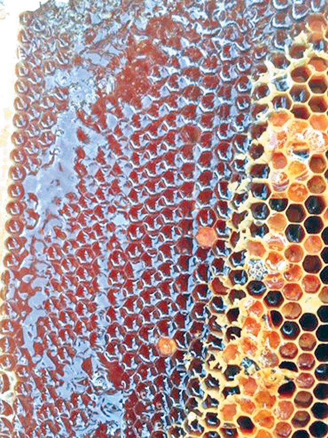 Mật ong,  Tân Kéo, quà tặng, sức khỏe,  từ thiên nhiên
