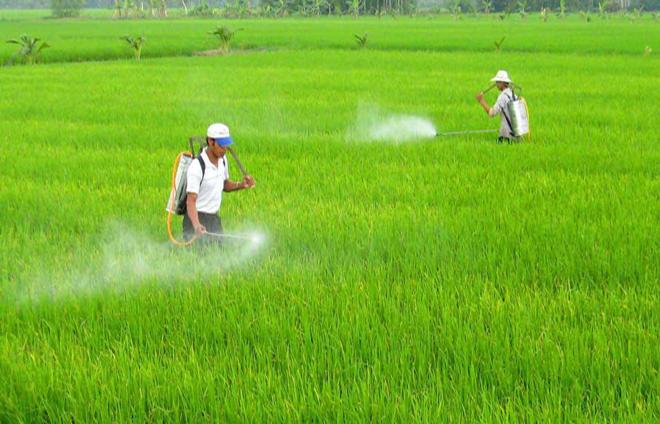 Việt Nam, nhập khẩu, thuốc bảo vệ thực vật, chủ yếu, Trung Quốc