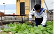 """100% cán bộ, y, bác sĩ Bệnh viện Quân y 110 ủng hộ chương trình """"Vườn rau Trường Sa"""""""