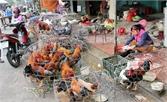 Giết mổ gia cầm tự phát tại chợ: Không an toàn