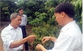 Nâng hiệu quả kinh tế cây ăn quả: Khuyến khích liên kết  tổ, nhóm, hợp tác xã