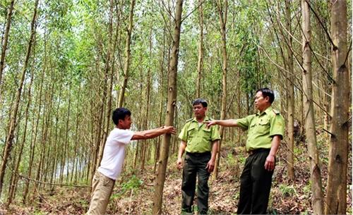 Để rừng mãi xanh