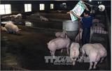 Bộ Nông nghiệp và PTNT chỉ đạo hỗ trợ tiêu thụ thịt lợn