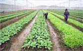 Xây dựng 28 mô hình  nông nghiệp ứng dụng công nghệ cao