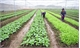 Bac Giang to develop 28 hi-tech flower, vegetable farms