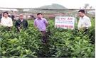 Yên Thế: Hỗ trợ phát triển cây ăn quả