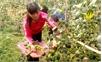 Thu nhập cao từ vườn - rừng
