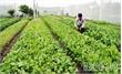 Thành lập HTX Sản xuất, kinh doanh nông sản sạch Đa Mai