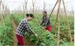Sản xuất nông nghiệp công nghệ cao: Tăng năng suất, thích ứng biến đổi khí hậu