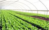 Tân Yên phát triển sản xuất nông nghiệp ứng dụng công nghệ cao