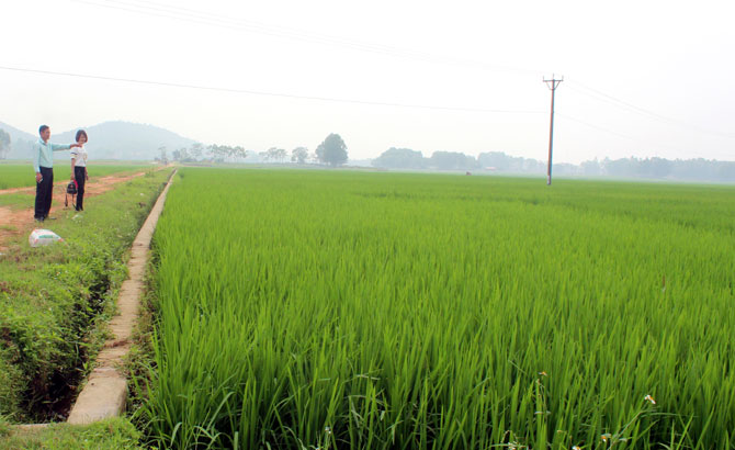 Kinh nghiệm dồn điền, đổi thửa ở xã Quang Minh: Bảo đảm công bằng về quyền lợi