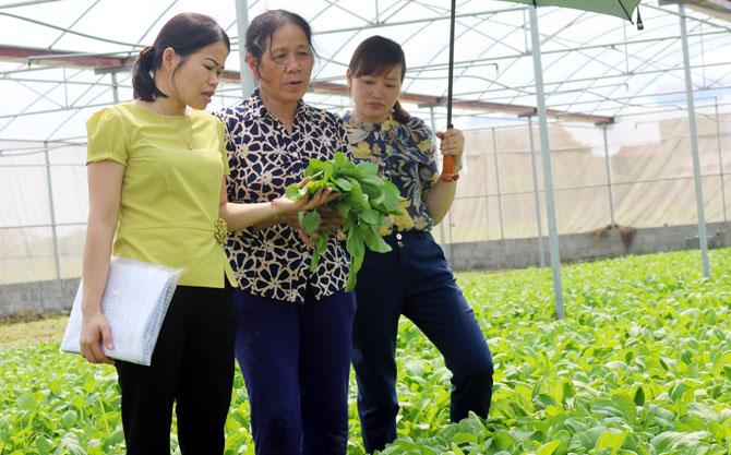 Sản xuất nông nghiệp ứng dụng công nghệ cao ở Lục Nam: Tín hiệu vui từ mô hình điểm