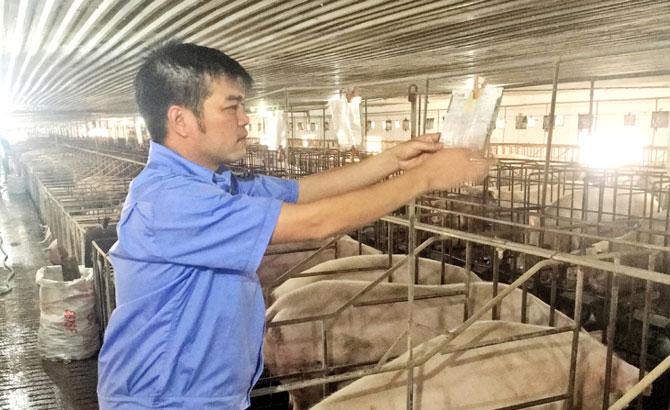 Giá lợn rẻ, nguy cơ dịch bệnh bùng phát