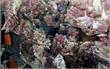 Khởi tố vụ án hất chất bẩn vào quầy bán thịt lợn ở TP Hải Phòng