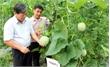Nâng giá trị sản xuất vụ mùa, đóng góp vào tăng trưởng chung của ngành nông nghiệp
