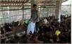 Bắc Giang: Triển khai cơ chế, chính sách hỗ trợ khôi phục sản xuất vùng bị thiệt hại do thiên tai, dịch bệnh