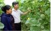 Sản xuất nông nghiệp: Khắc phục khó khăn, bảo đảm tăng trưởng