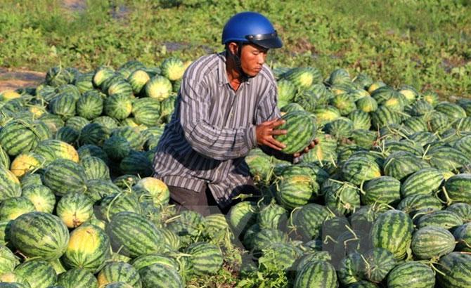 Opportunities for Vietnam's fruits, vegetables export