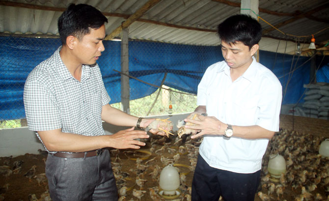 Chăn nuôi an toàn sinh học ở Bắc Giang: Giảm dịch bệnh, tăng hiệu quả