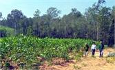 Sơn Động: Trồng mới hơn 1 nghìn ha rừng kinh tế