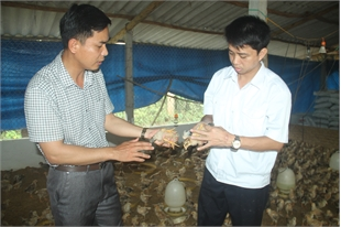 Bac Giang focuses on biosafety breeding