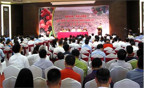UBND tỉnh Bắc Giang xúc tiến tiêu thụ vải thiều năm 2017: Kết nối, khơi thông thị trường trong và ngoài nước