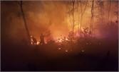 Bắc Giang: Cháy rừng tại huyện Việt Yên và Yên Dũng