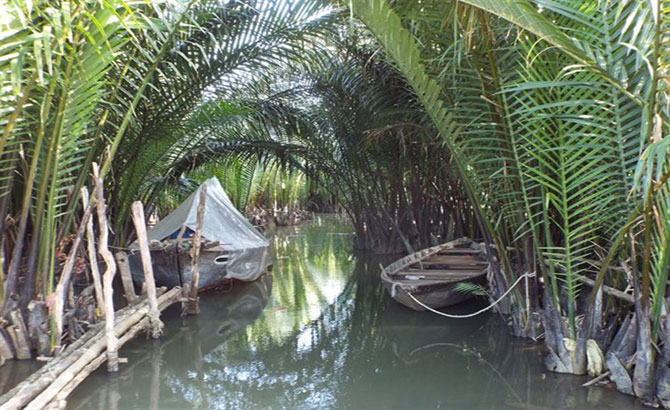 Nipa palm afforestation tour to be launched