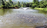 Hỗ trợ nuôi cá an toàn sinh học