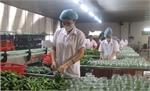 Xuất khẩu rau, quả ước đạt 1,38 tỷ USD