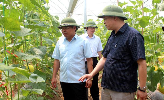 Phó Chủ tịch UBND tỉnh Dương Văn Thái: Đẩy mạnh ứng dụng công nghệ cao, hình thành sản xuất theo chuỗi liên kết