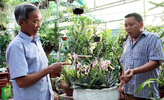 Làm đẹp không gian sống với phong lan