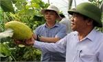 Giới thiệu một số giống cây trồng mới