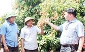 Chủ tịch UBND tỉnh Nguyễn Văn Linh: Áp dụng kỹ thuật tiên tiến tăng năng suất, chất lượng vải thiều