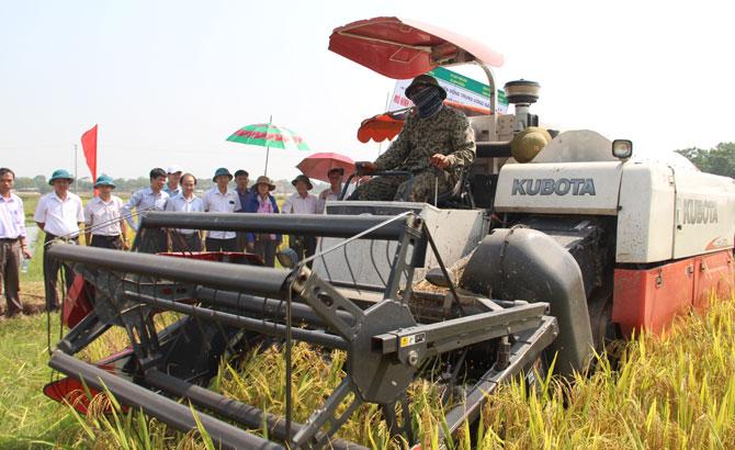 Đánh giá mô hình áp dụng cơ giới hoá đồng bộ sản xuất lúa, lạc theo cánh đồng lớn