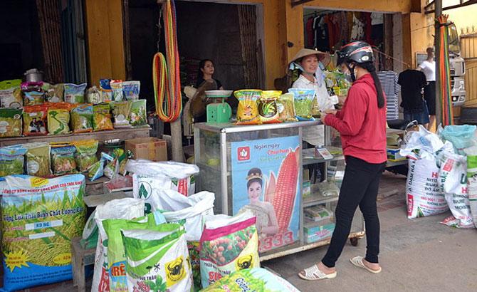 Tân Yên: Hỗ trợ giá giống lúa chất lượng TBR225