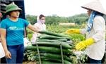 Đồng Kỳ ứng dụng công nghệ cao vào sản xuất nông nghiệp: Từ điểm nhân diện