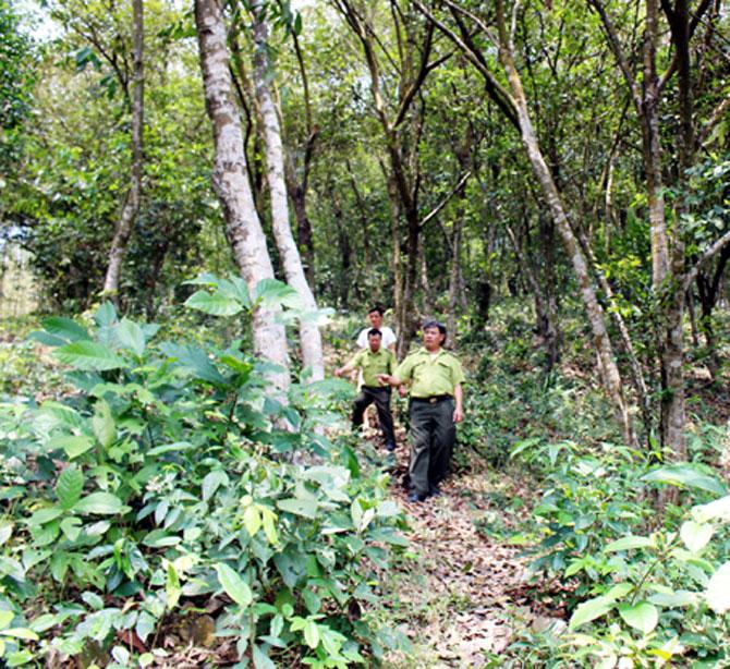 lợi riêng, hệ lụy,  rừng kinh tế, Sơn Động