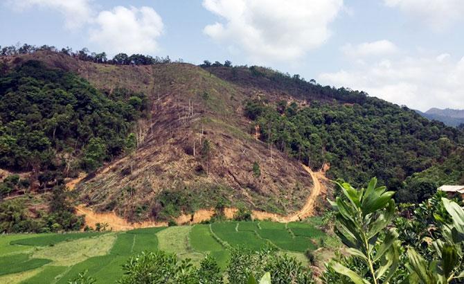 Tự chuyển đổi rừng tự nhiên: Tham lợi riêng, nhiều hệ lụy