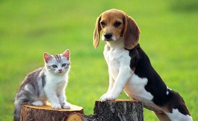 Nhận biết chó mèo bị bệnh dại
