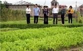 Hỗ trợ các HTX trên địa bàn huyện Việt Yên quảng bá, liên kết tiêu thụ sản phẩm