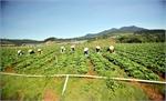 Thành lập tổ liên kết sản xuất rau an toàn